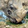 Indian Rhinoceros Guwahati Zoo