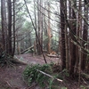 Inside Mount Mitchell State Park NC
