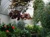 Inside Palm House