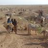 Inhabitants Of Danan Herding Cattle