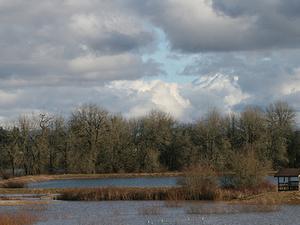Jackson Bottom Wetlands Preserve
