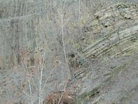 Allegany Plateau