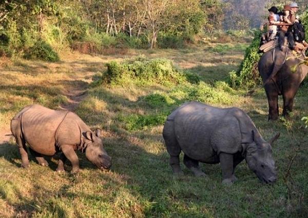 Chitwan Jungle Safari Tours Photos