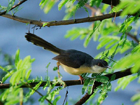 Karaivetti Bird Sanctuary