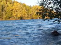 Kasilof River