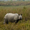 Guwahati - Kaziranga Wildlife Sanctuary Tour Package