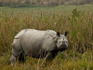 Guwahati - Kaziranga Wildlife Sanctuary Tour Package Photos