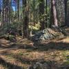 Kelsey Trail