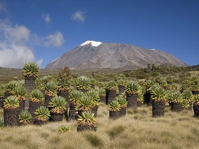 Kilimanjaro NP Landscape