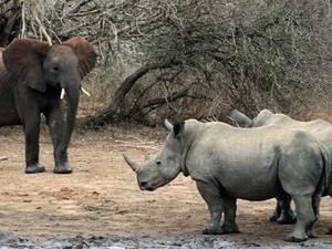 Kruger Park Safari Photos