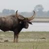 Koshi Tappu Reserva de Vida Silvestre