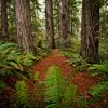 Lady Bird Johnson Grove Trail