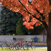 Lakehead University Fall Campus