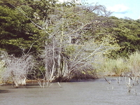 Lake Rukwa