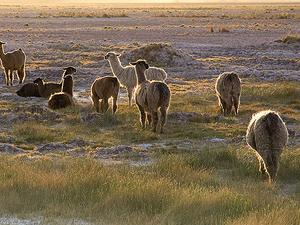 Paquete a San Pedro de Atacama 6 días