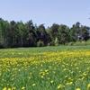 Landscape between Brańsk and Boćki Communes.