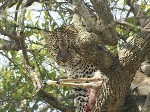 Masai Mara Safari Photos