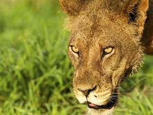 5 Day Kalahari Safari Photos