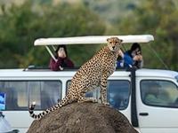Super Saver Masai Mara Luxury Safari