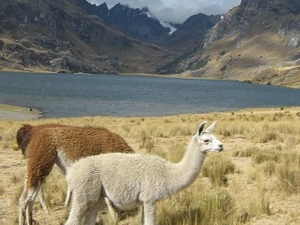 Todo Incluido Huaraz 3 Dias / 2 N Photos