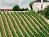 Couly Dutheil Vineyard In Chinon