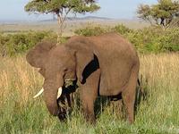 SKSN-001: 3 Days Maasai Mara Camping Safari