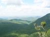 Madhumalia Forest