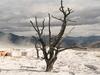 Mammoth Hot Springs Nature Trail - Yellowstone - USA