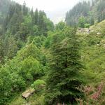 Manali Santuario de Vida Silvestre