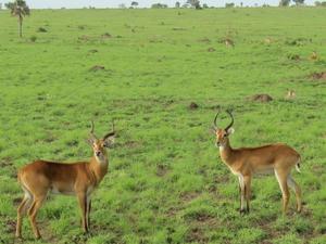 Manovo Gounda-St. Floris National Park