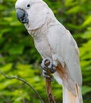 Manusela Parque Nacional