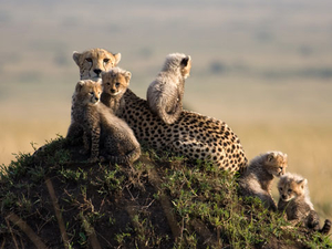 Masai Mara Camping Safari Photos