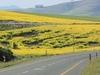 MilebyMile Tours - Cape Town