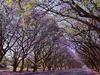 Milton Avenue @ Harare - Zimbabwe