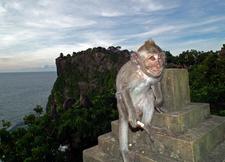 Monkey At Ulu Watu Temple