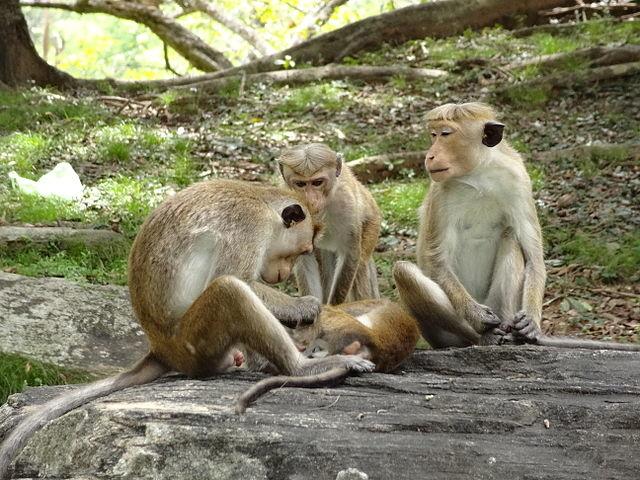 The Monkey Kingdom Tour Photos