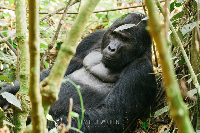 Wildlife and Gorilla Adventure Photos