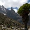 Mt. Kenya Naro Moru Side - Kenya