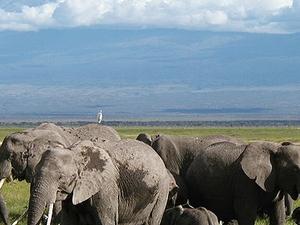 The Shade Of Mount Kilimanjaro Safari Fotos
