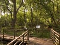 Muara Angke Nature Reserve