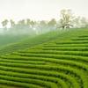 Munnar Tea Garden - Kerala