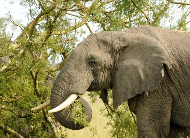 Murchison Falls National Park Wildlife Safari Photos