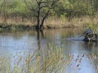 Nadwarciański Park Landscape