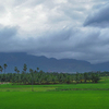 Nagercoil Paddy Fields