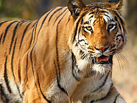 Nagzira Wildlife Sanctuary