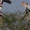 Nandur Madhmeshwar Bird Sanctuary2