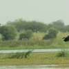 Nandur Madhmeshwar Bird Sanctuary3