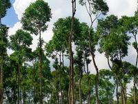 Phong Nha - Ke Bang, el Parque Nacional
