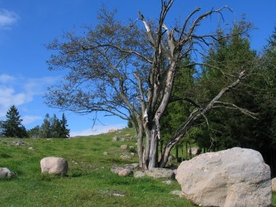 Nature Reserve Of Łopuchowskie Boulder Field