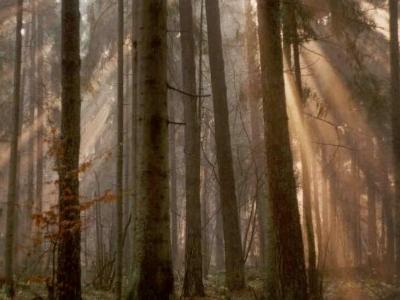 Nature Reserves Of Czarna Białostocka Commune